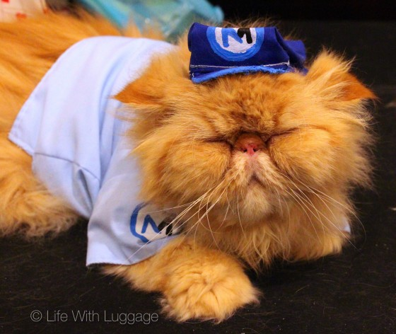 algonquin hotel cat fashion show 2