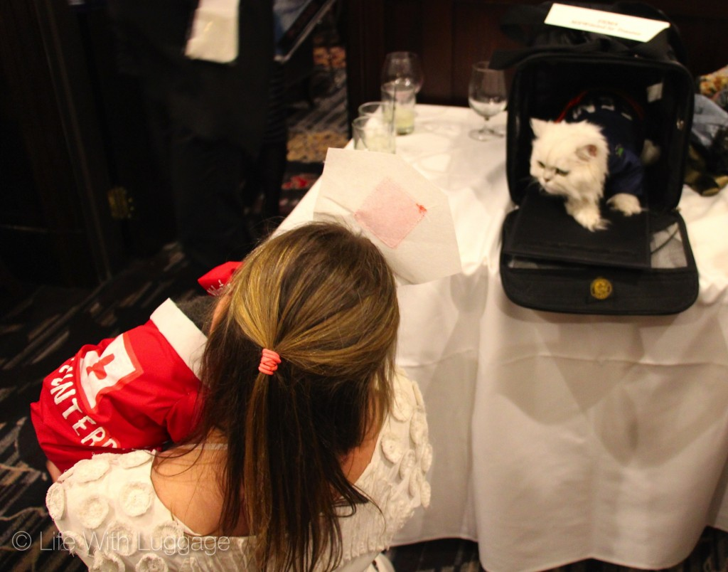 algonquin hotel cat fashion show 4