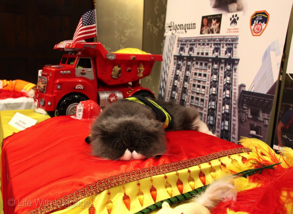 algonquin hotel cat fashion show fdny